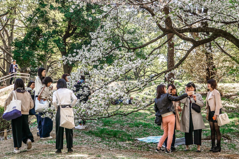 Kirschblüte in Tokio: Die fünf schönsten Orte und Hotspots zur Sakura - Shinjuku Gyoen Park