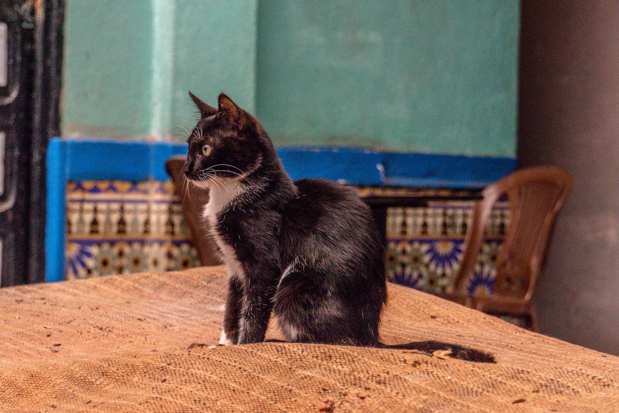 Top Ten Marrakesch Sehenswürdigkeiten - meine Marrakesch Highlights: Medina Katze