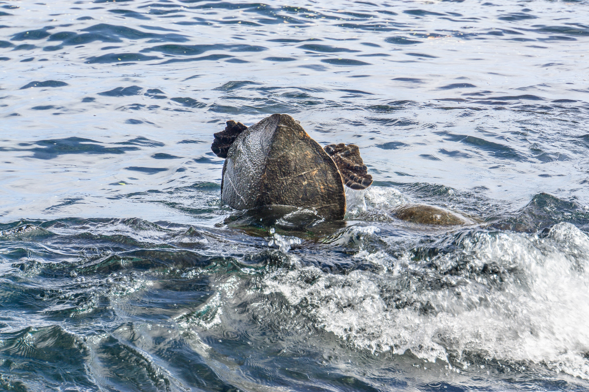 Phantastische Tierwesen und wo sie zu finden sind – Big Island Edition