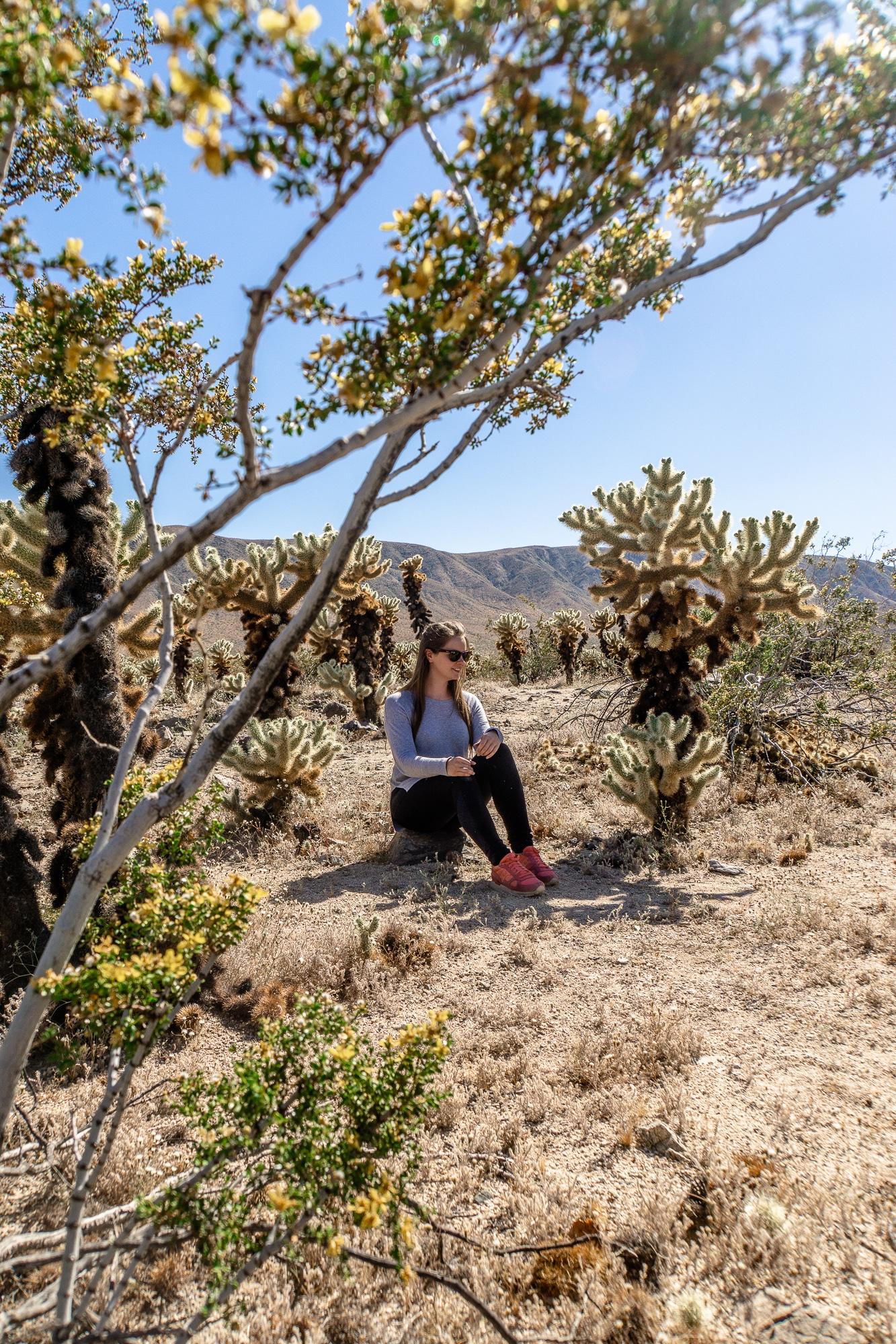 Joshua-Tree-Nationalpark: Die schönsten Sehenswürdigkeiten & Highlights - Cholla Cactus Garden