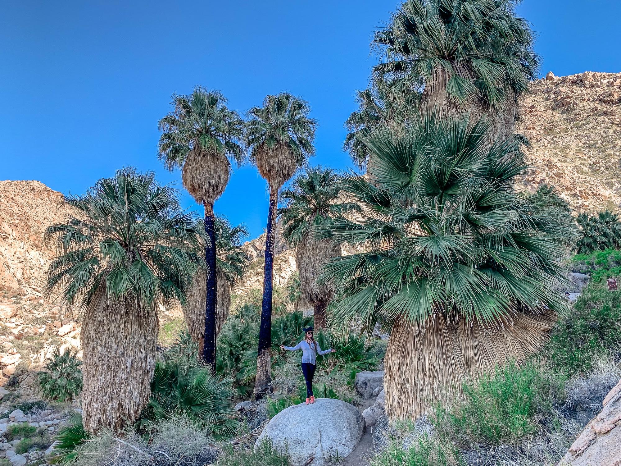 Joshua-Tree-Nationalpark: Die schönsten Sehenswürdigkeiten & Highlights - Fotynine Palms Oasis Trail