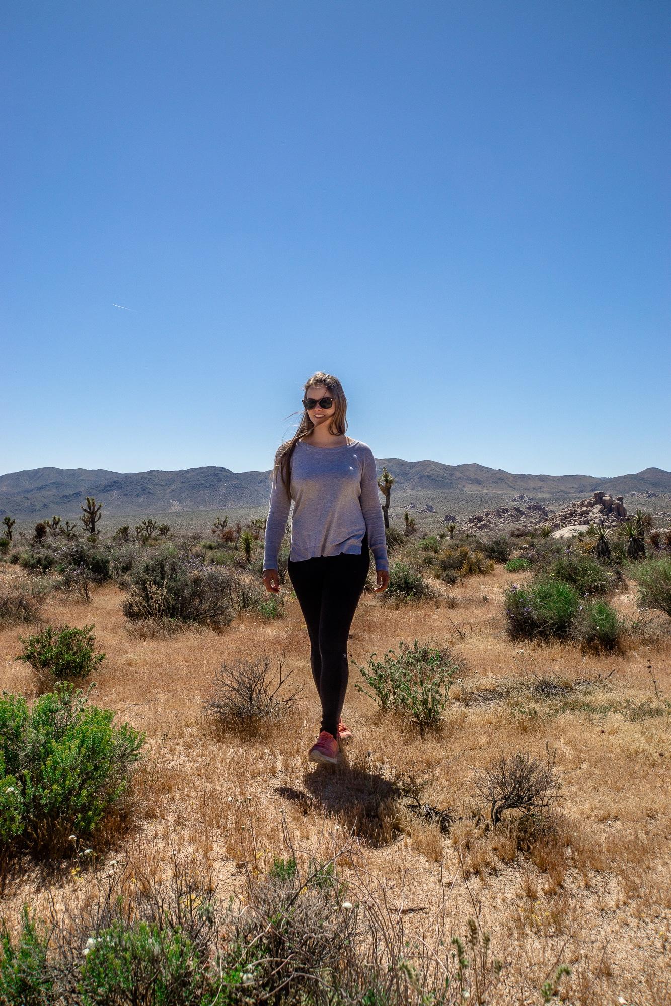 Joshua-Tree-Nationalpark: Die schönsten Sehenswürdigkeiten & Highlights - Geology Tour Road
