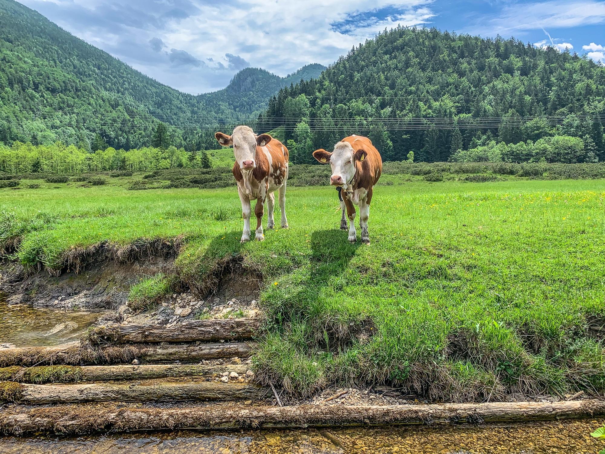 BergeSeen Trail: Erfahrungen auf der Weitwanderung im Salzkammergut