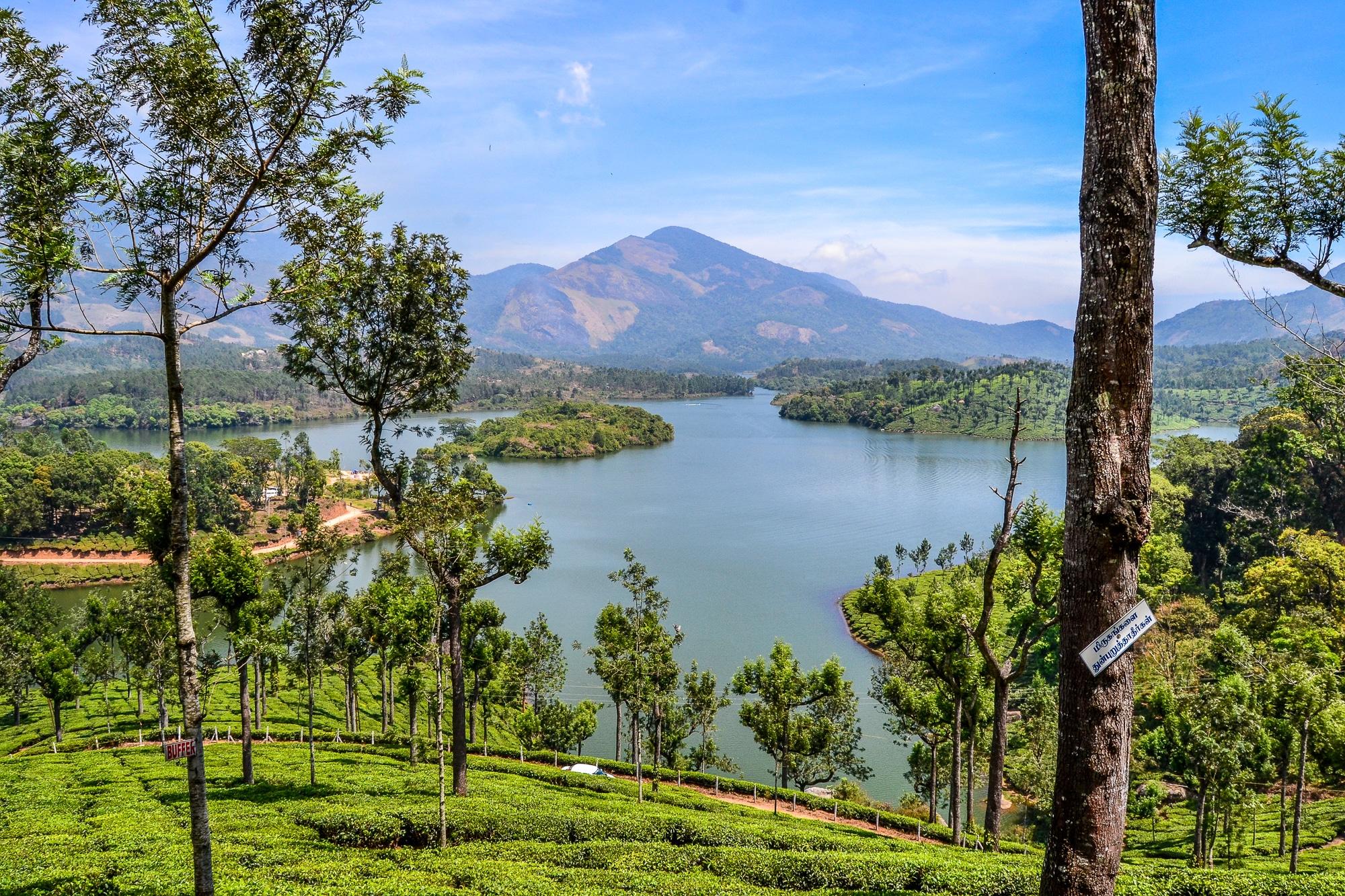 Kerala: Sehenswürdigkeiten, Kultur und Kulinarik im südlichen Indien - Teeplantagen Munnar Hill Station