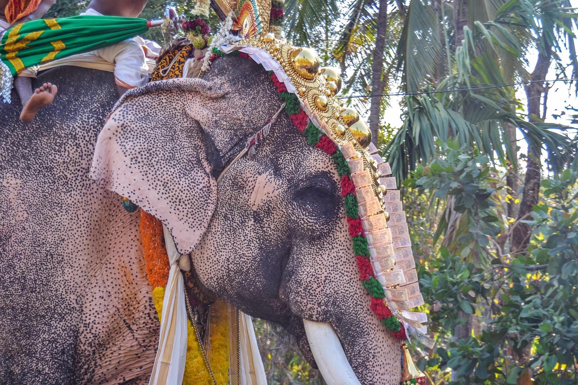 Kerala: Sehenswürdigkeiten, Kultur und Kulinarik im südlichen Indien - Elefant bei Tempel Prozession