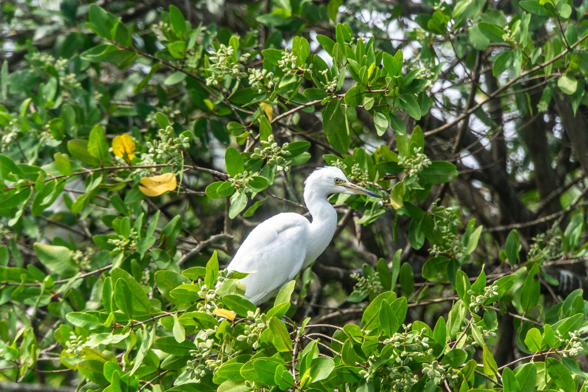 Laguna Ventanilla: Krokodile, Iguanas und Vögel beobachten in Mazunte - Vogelarten