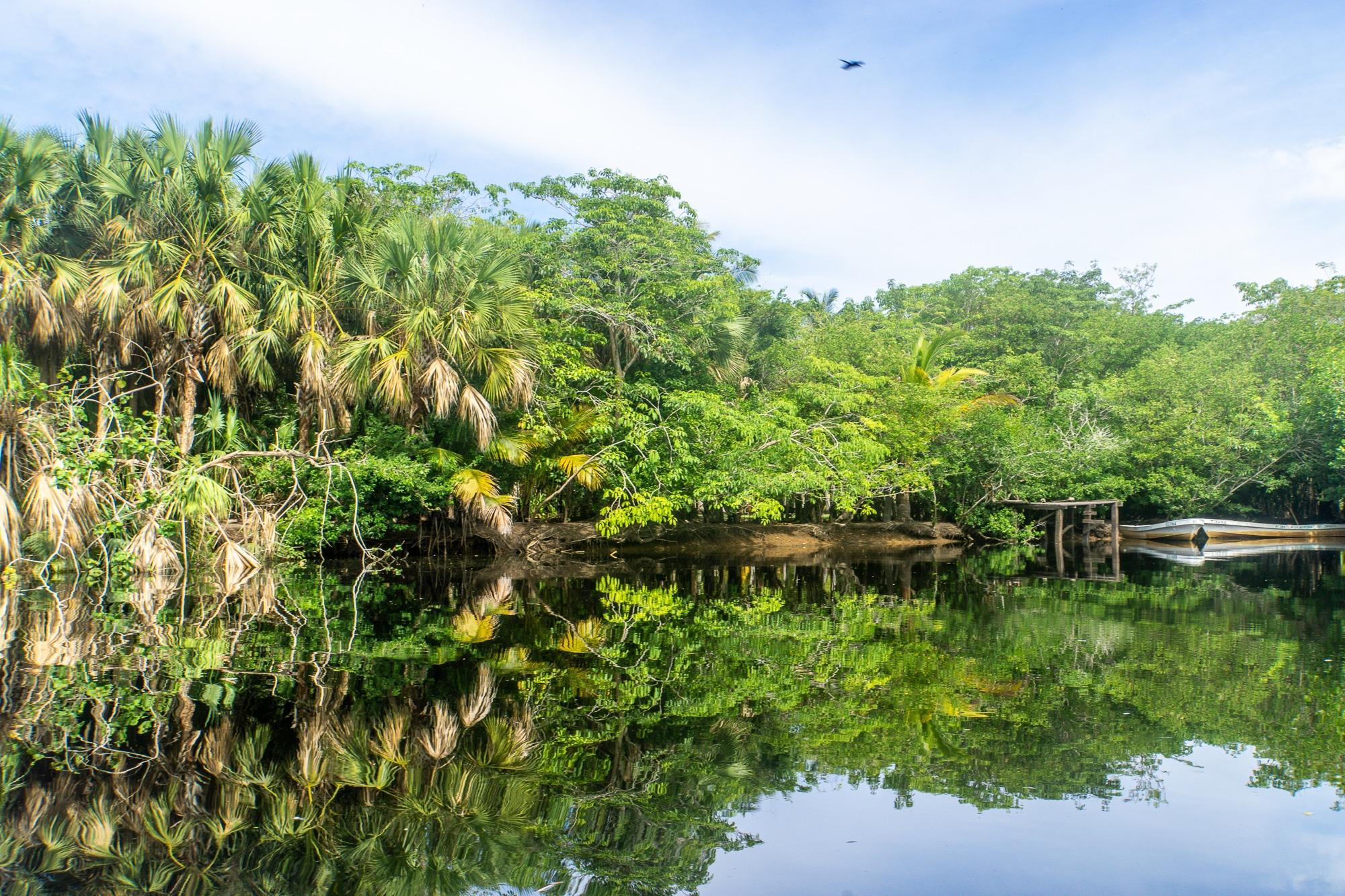 Laguna Ventanilla: Krokodile, Iguanas und Vögel beobachten in Mazunte - Mangroven