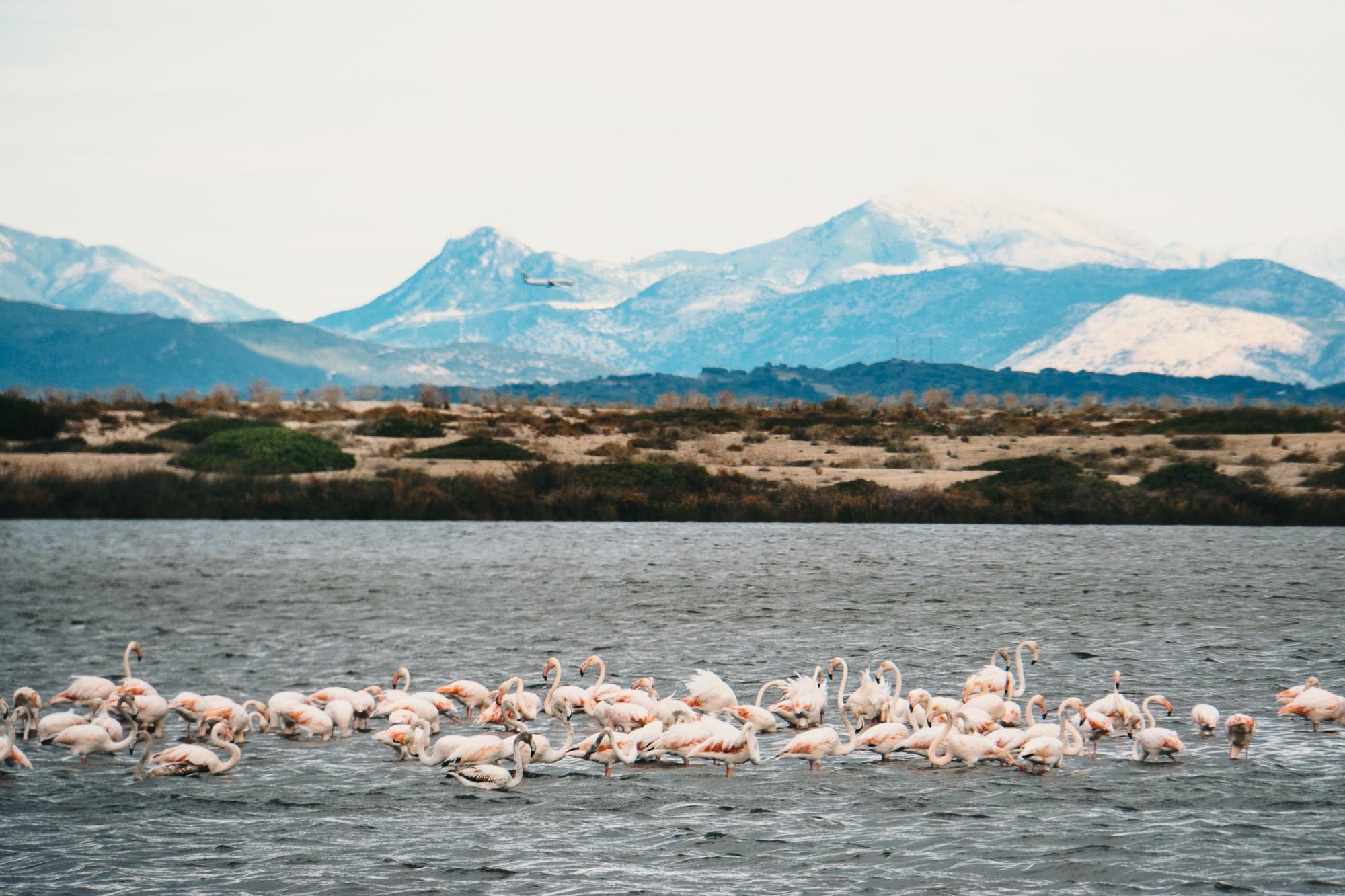 Flamingos auf Lefkada