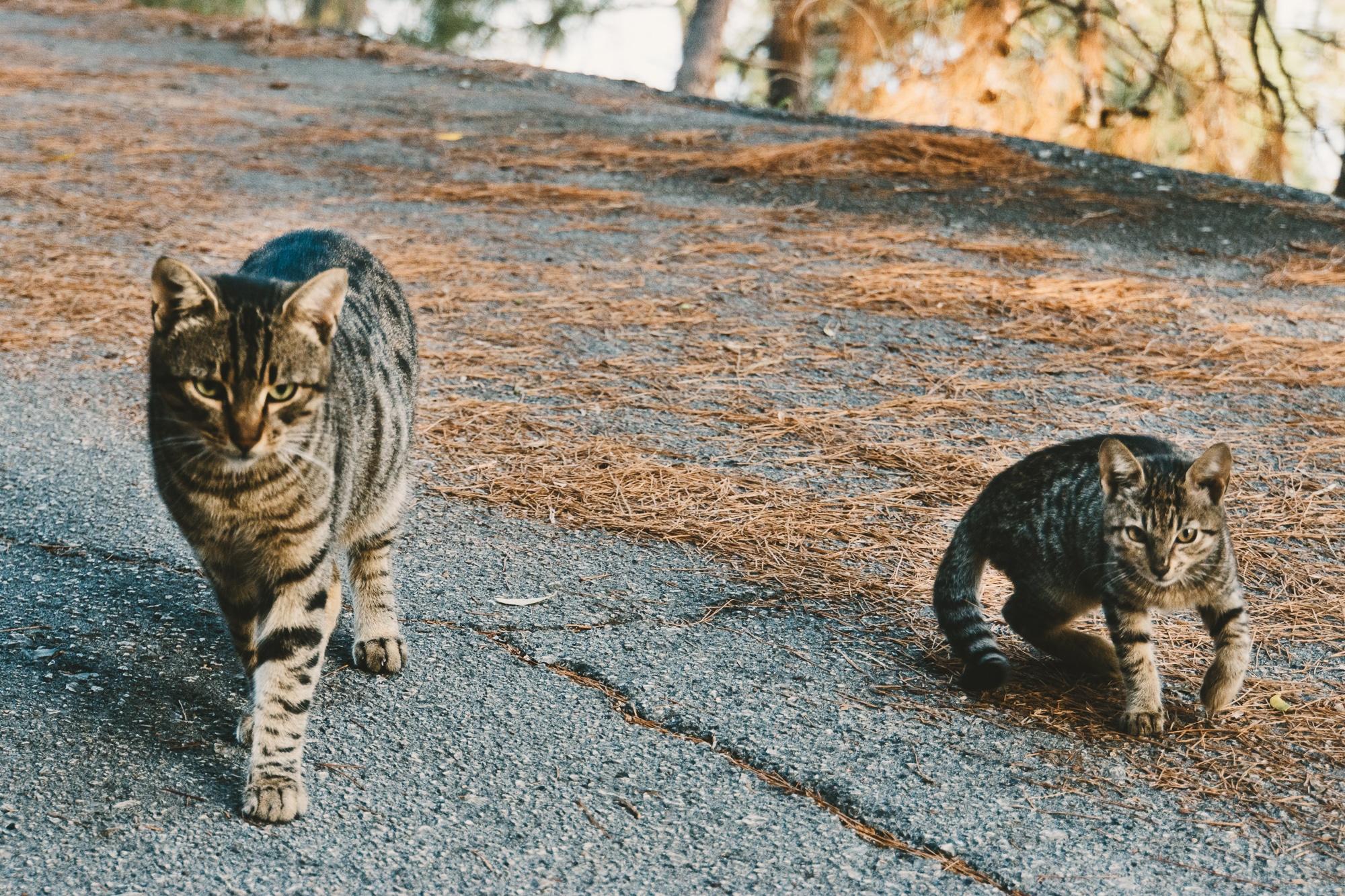 Meganisi: Katzen auf der Straße