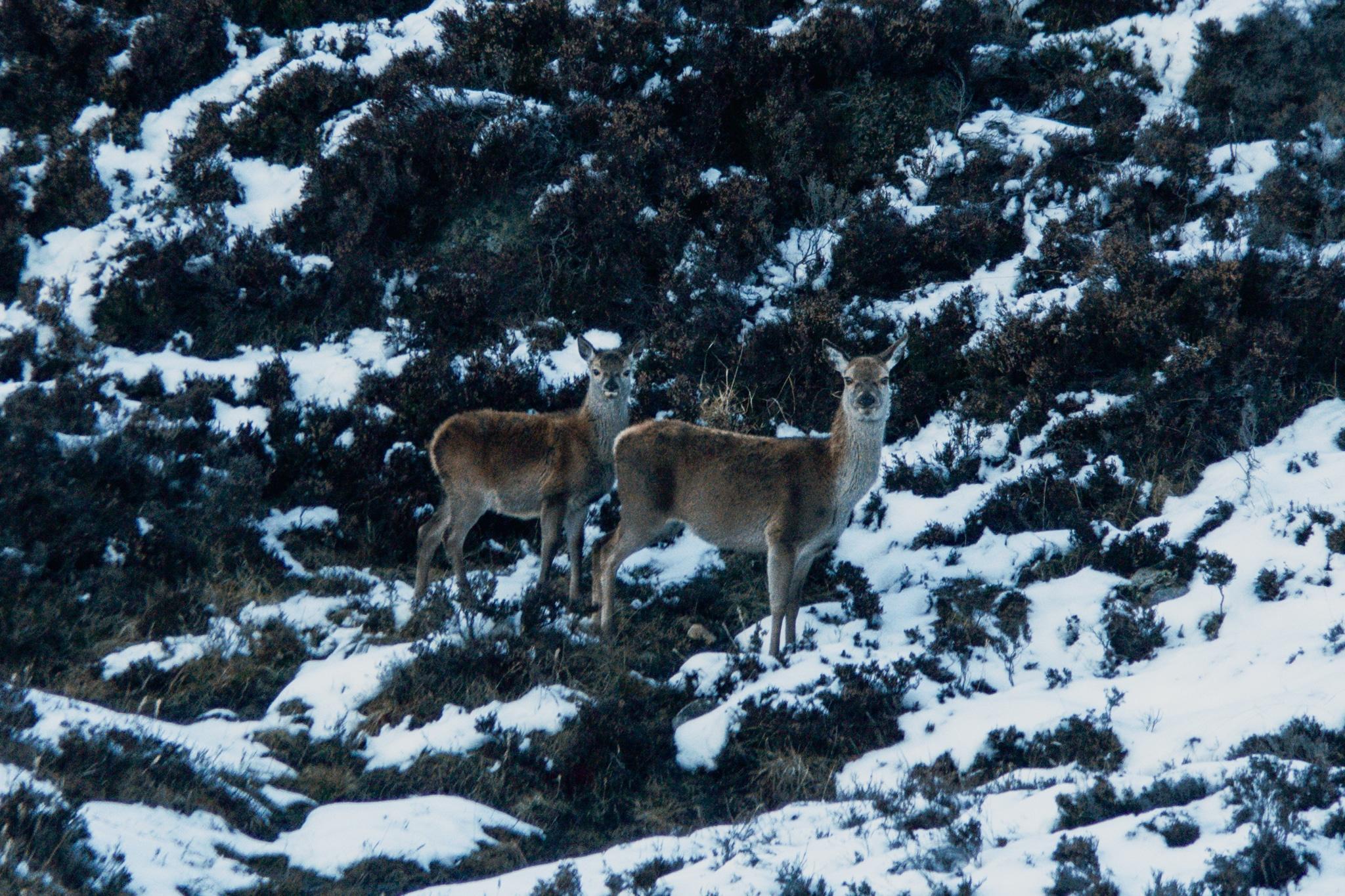 Cairngorms Nationalpark: Die SnowRoads Scenic Route in den Highlands - Wanderung zum Loch Callater