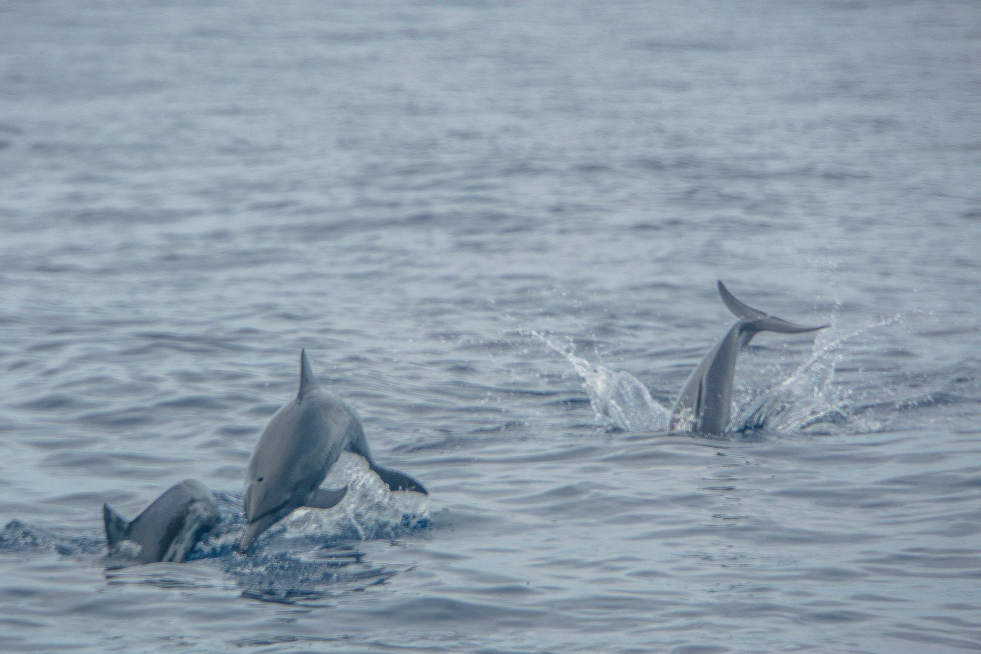 Puerto Escondido: Highlights, Erlebnisse und Ausflugsziele in Mexiko - Bootstour Delfine beobachten und schnorcheln