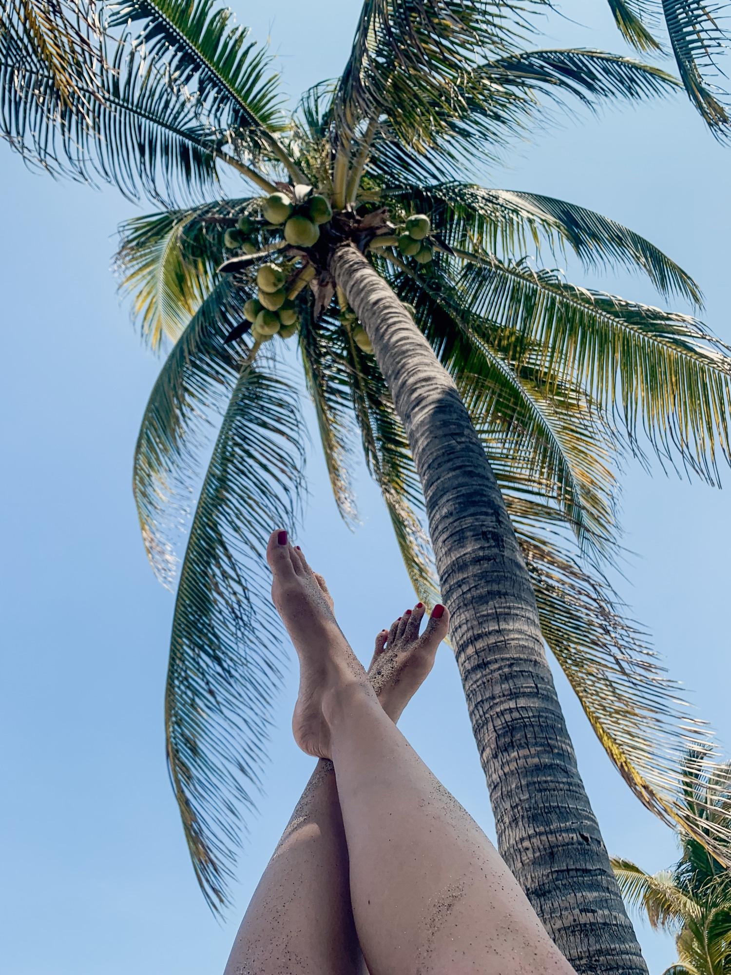 Puerto Escondido: Highlights, Erlebnisse und Ausflugsziele in Mexiko - Playa Zicatela Palmen