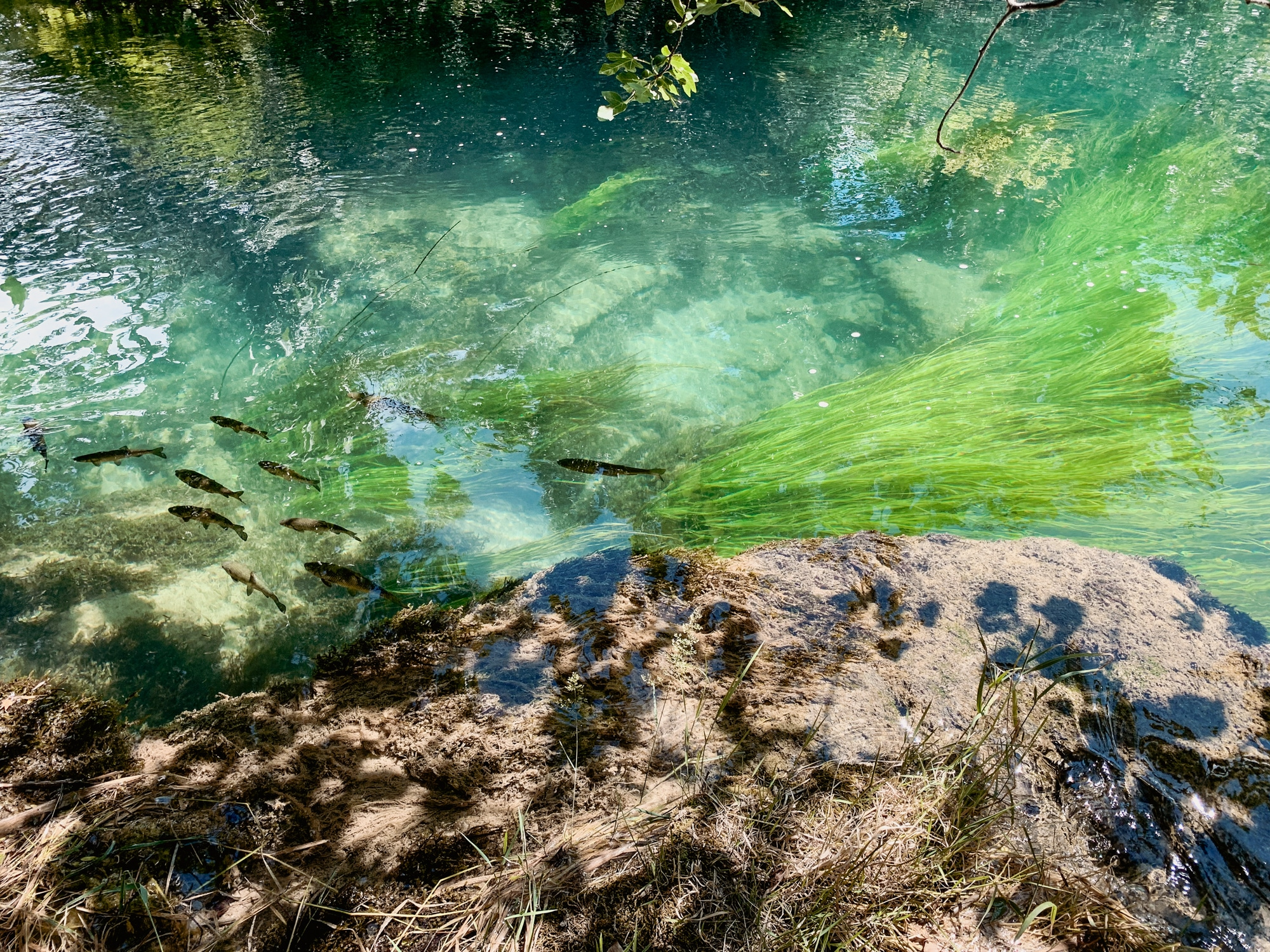 Krka Nationalpark: Tipps, Sehenswürdigkeiten und die Highlights im Park - Fische im glasklaren See
