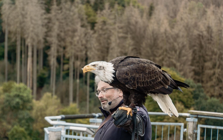 Adlerwarte Berlebeck Erfahrungen - Flugshow