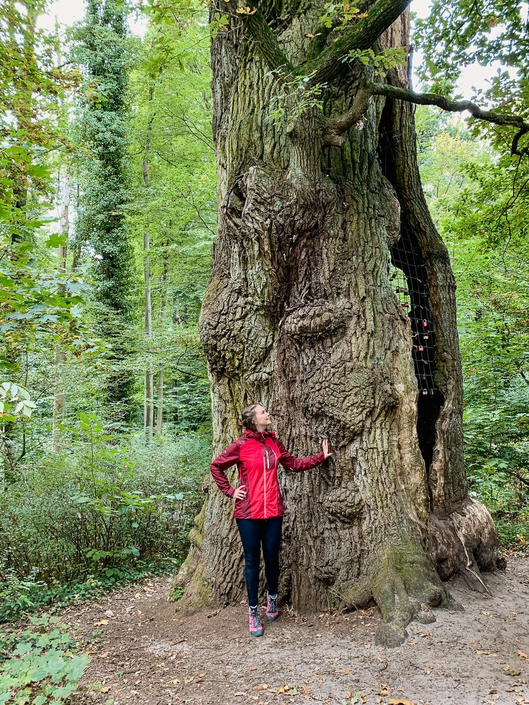 Schlossweg in Verl: Mein Tipp zum Wandern im Teutoburger Wald - 1000 jährige Eiche