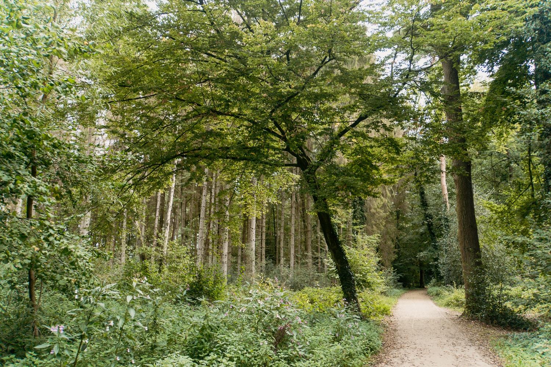 Schlossweg in Verl: Mein Tipp zum Wandern im Teutoburger Wald