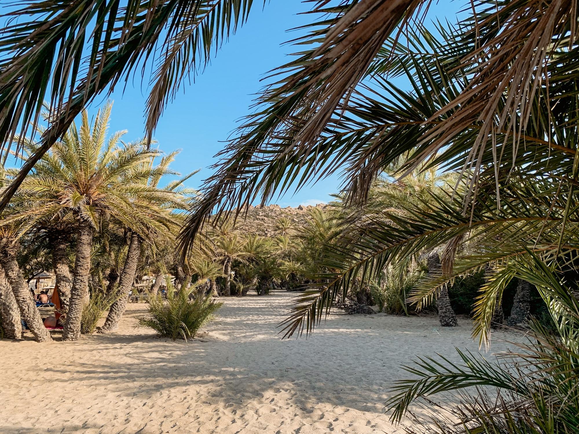 Schönste Strände auf Kreta: Das sind die sechs schönsten Kreta Strände - Palmenstrand Vai Beach