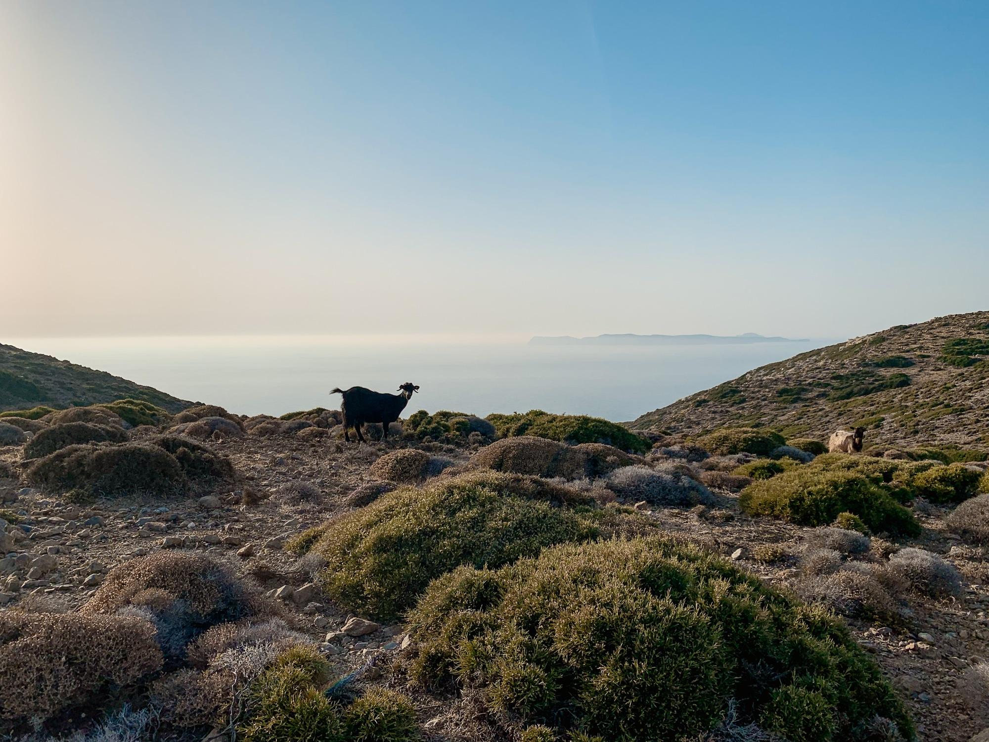 Kreta Sehenswürdigkeiten: 13 Stopps für deinen Kreta Roadtrip - Sitia Geopark