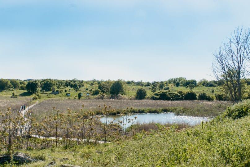 Durankulak See Biotop in Bulgarien